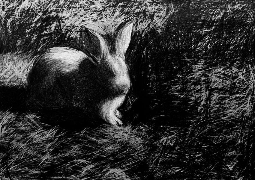2 The Helpless Rabbit