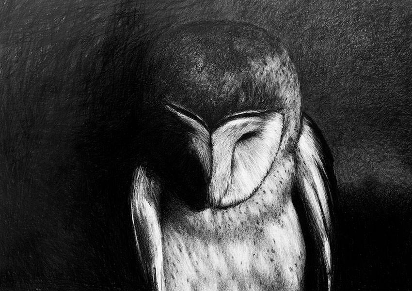 3 Owl4
