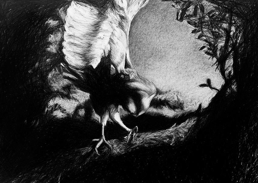 5 Owl2