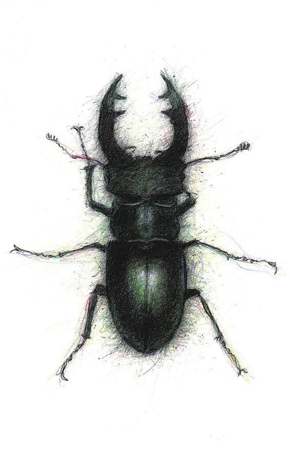 Stage-Beetle